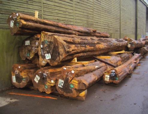 FSC-zertifiziertes Ebenholz